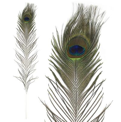 Eleganza Large Peacock Eye Feathers 76-88cm 5pcs - Accessories
